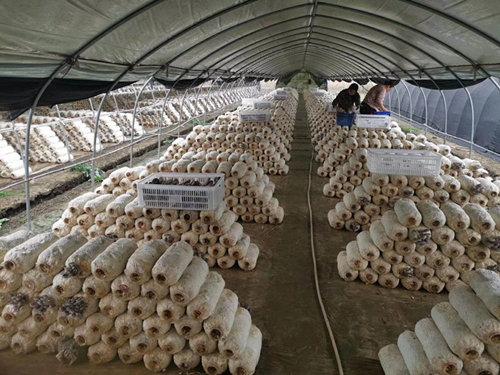 mushroom cold room.jpg