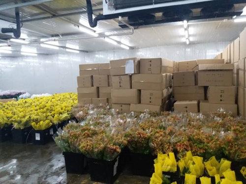 flower cold storage.jpg